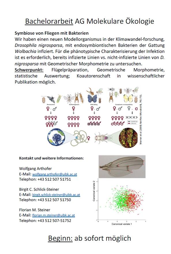 Symbiose von Fliegen mit Bakterien