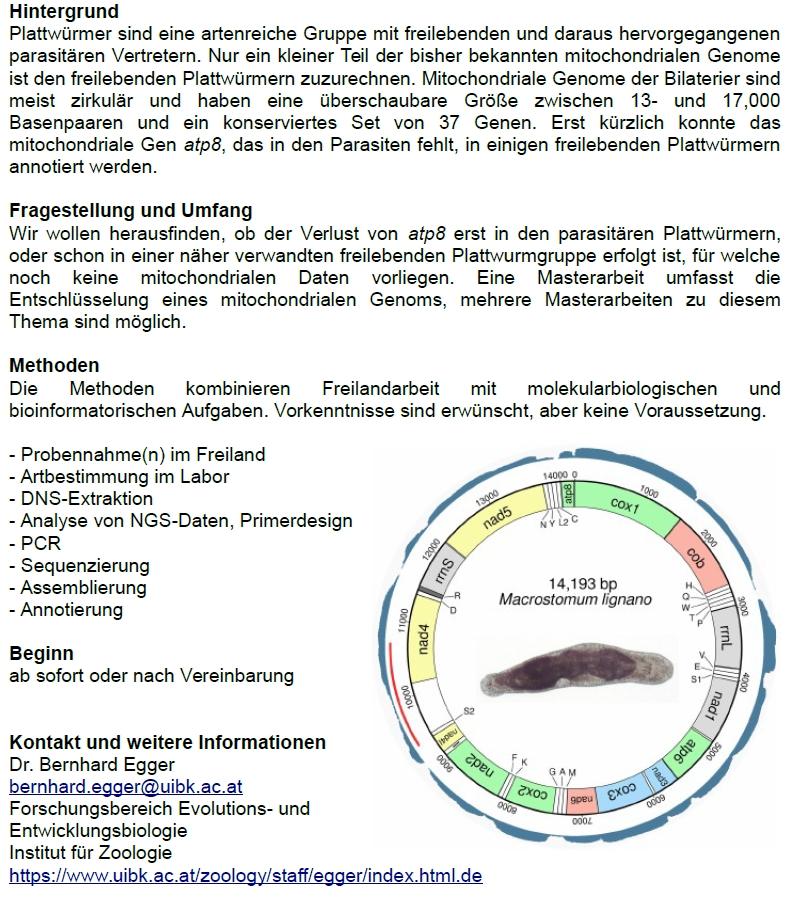 mitochondriale Genome