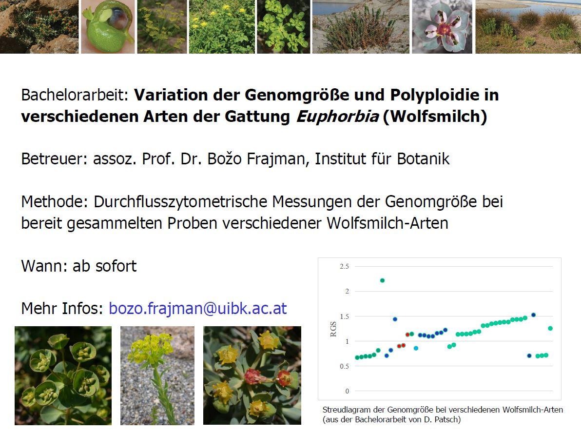 BA arbeit variation der genomgrößen und polyploidiein verschiedenen arten der gattung euphorbia